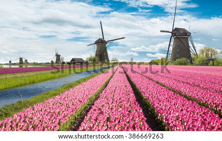 Windmill with beautiful tulip field in Holland. - stock photo