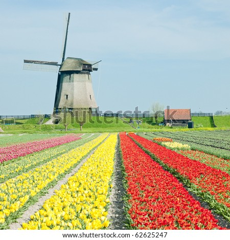 windmill with tulip field near Schermerhorn, Netherlands - stock photo