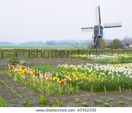windmill with tulips and daffodils near Offem, Netherlands - stock photo