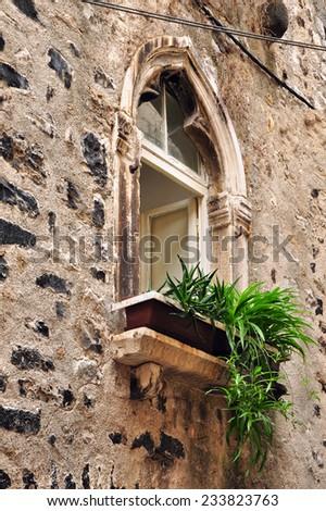 window and plant - stock photo