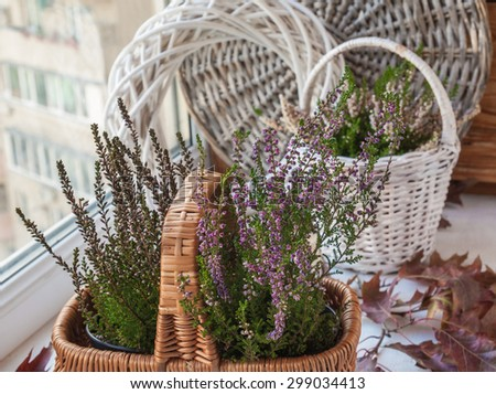 Window with autumn composition with heather in a basket and oak leaves - stock photo
