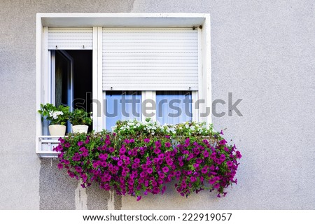 window with shutters decorated with petunias - stock photo