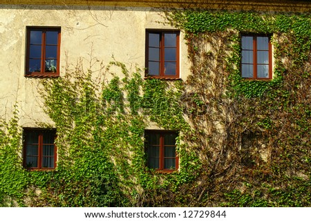 Windows on a wall covered with grapes vine - stock photo