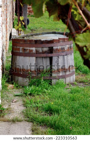 wine cellar on Morava, Czech, after harvest - stock photo