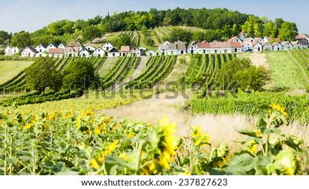 wine cellars with vineyards, Galgenberg, Lower Austria, Austria - stock photo