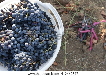 Wine grapes in a basket - stock photo