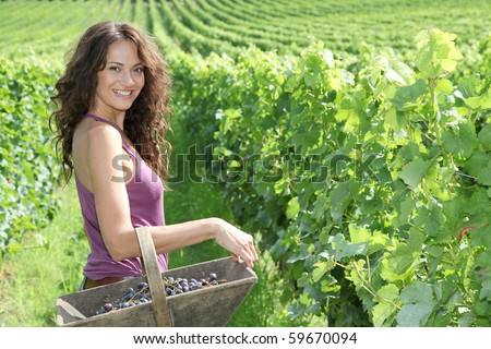 Winegrower woman standing in vine rows with basket of grapes - stock photo
