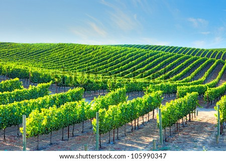 Wineries in Napa Valley. - stock photo