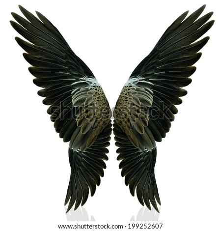 Black Angel Wings Stock Photos, Images, & Pictures | Shutterstock