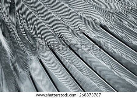 wing of bird close up, black and white - stock photo