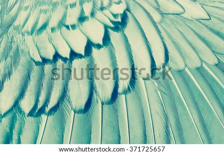 wing of bird close up, x-ray effect effect - stock photo