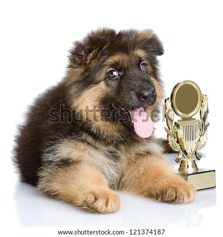 winner dog. isolated on white background - stock photo
