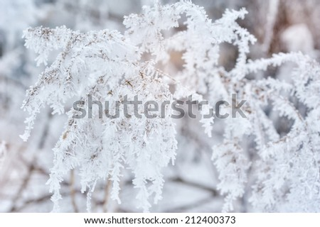 Winter background, close up of frosted pine branch on a snowing day with copy space  - stock photo