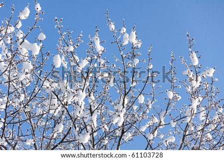 winter background of the frosted trees - stock photo