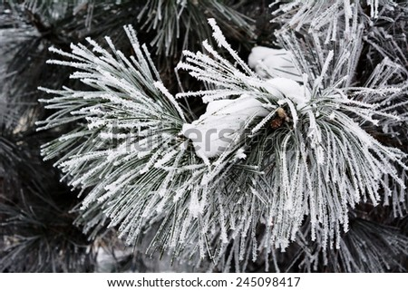 Winter background - the branches of trees covered with hoarfrost, close-up - stock photo