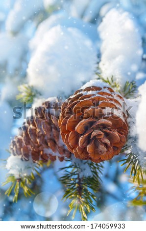 Winter background with pine cones - stock photo