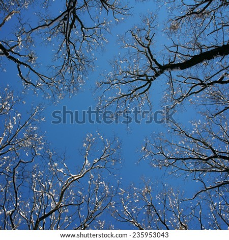 Winter background with snowy tree branches and blue sky - stock photo