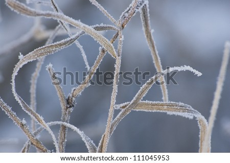 Winter background with the frozen grass - stock photo