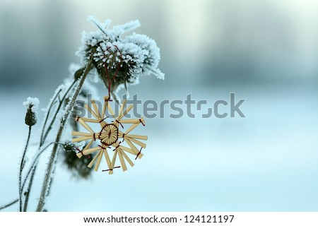 winter beautiful picture snowflake on the old grass thistle - stock photo