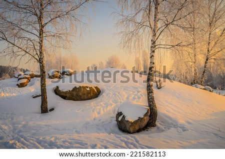 winter birches in the pink morning dawn - stock photo