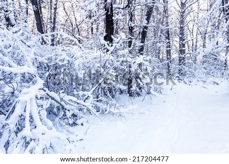 Winter branches of trees in hoarfrost on background snow - stock photo