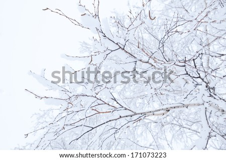 Winter branches of trees in hoarfrost on background snow and white sky - stock photo