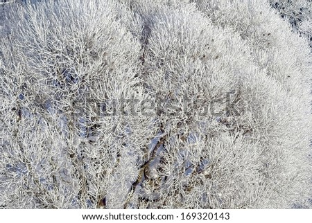 Winter bush - stock photo