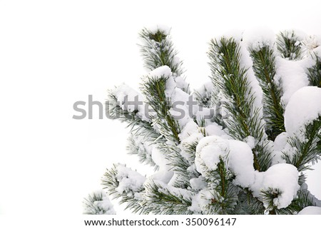 winter christmas tree snow tree on white background - stock photo