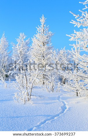 Winter day in the wood - stock photo