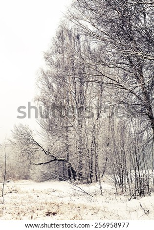 winter evening landscape with falling snow. Fog background with trees and dry grass covered with snow - stock photo