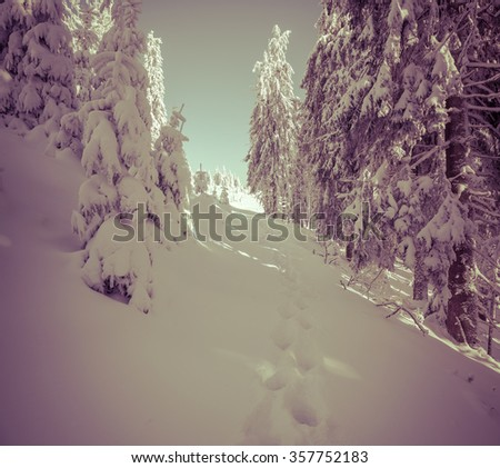 Winter fairytale scene in the mountain forest. Fir trees covered frost and fresh snow in the deep woodland. Retro style. - stock photo