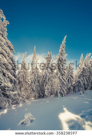 Winter fairytale scene in the mountain forest. Fir trees covered frost and fresh snow in the deep woodland. - stock photo