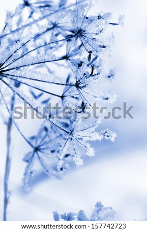 Winter floral background - stock photo