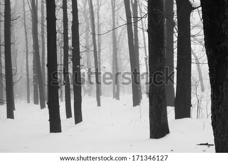 Winter foggy landscape in the park - stock photo