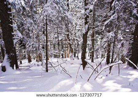 Winter forest covered with fresh snow - stock photo