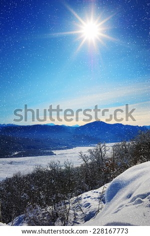 Winter forest, frost and sun. - stock photo