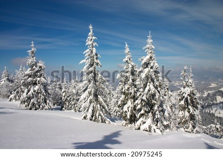 winter forest in Carpathian mountains. Blue sky with clouds - stock photo