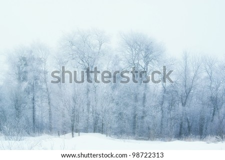 Winter forest in frost - stock photo