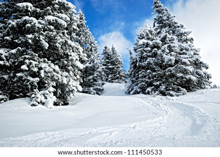 winter forest in Harz mountains - stock photo