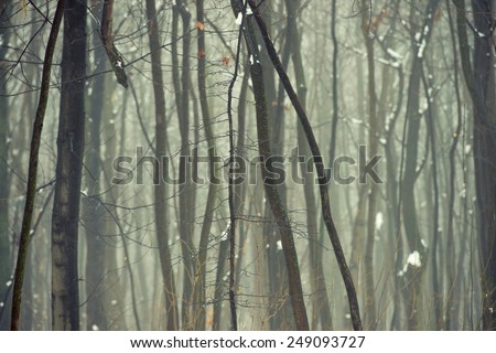 Winter forest in the fog - stock photo