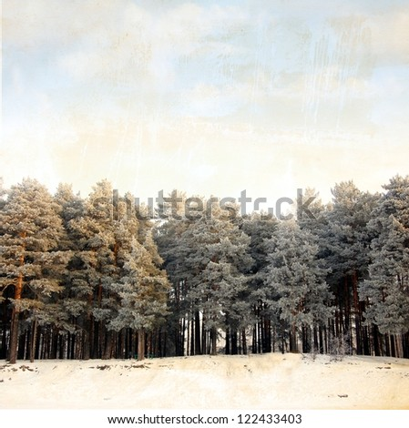 winter forest of evergreen fir trees on old paper - stock photo
