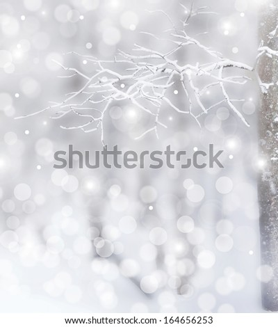 Winter Forest. Photo. - stock photo