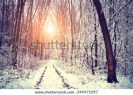 Winter forest snowy road - stock photo