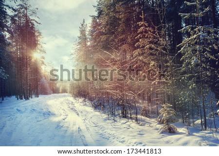 Winter forest sunset sunbeams - stock photo