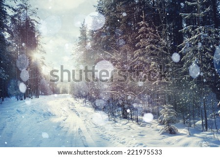 Winter forest sunset sunbeams - stock photo