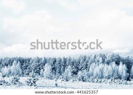 Winter forest. Winter landscape. Snow covered trees - stock photo