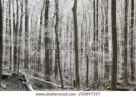 Winter forest with snow at The Great Smoky Mountains - stock photo