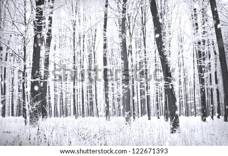 Winter forest with snow on trees and floor - stock photo