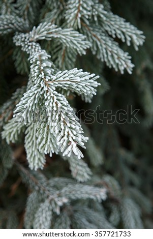 Winter frost on spruce christmas tree close-up - stock photo