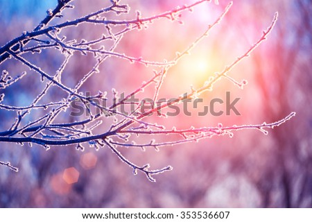 Winter frosty morning, trees covered with frost - stock photo
